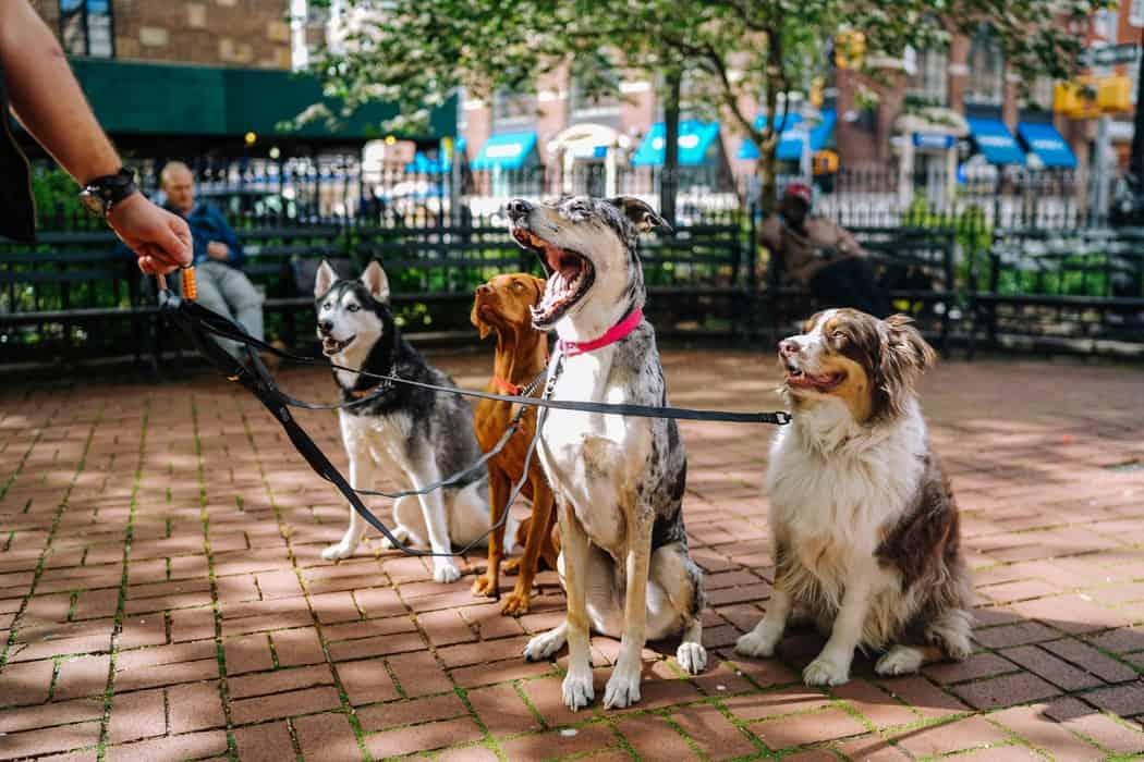 Three Best Dog-Friendly Bars and Restaurants in Chicago